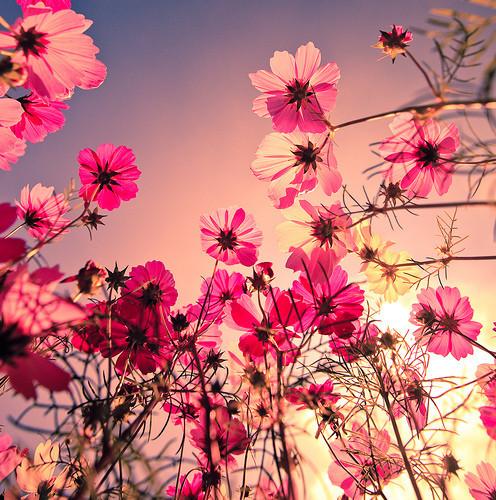 drawings-of-flowers-tumblr.jpg
