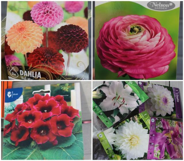 kukkia.jpg