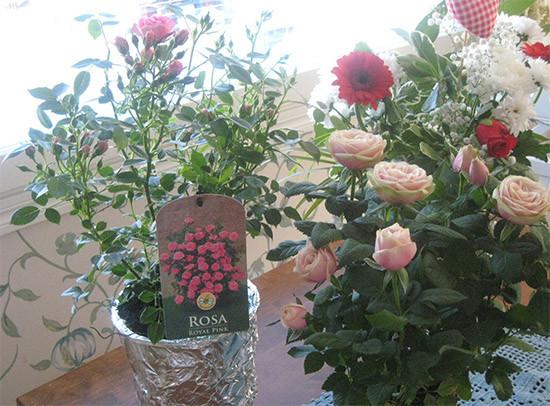 druusut.jpg