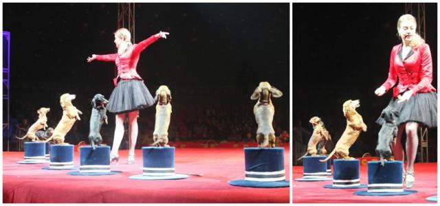 sirkuksessa5.jpg