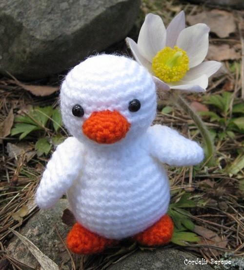 duck009.jpg