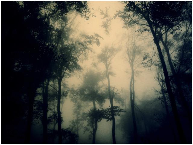 dark_forest_by_serialkillerstock.jpg