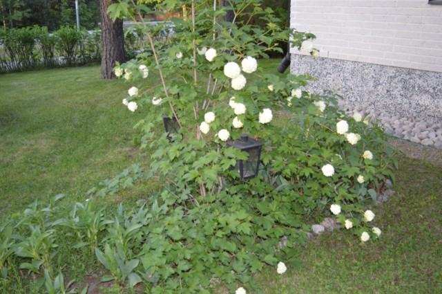 Kukkia%20yms%20008.jpg