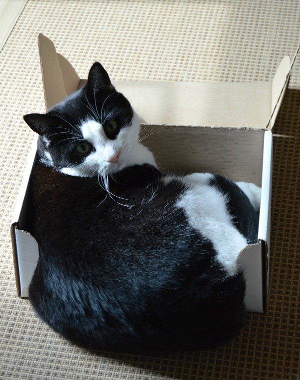laatikko1.jpg