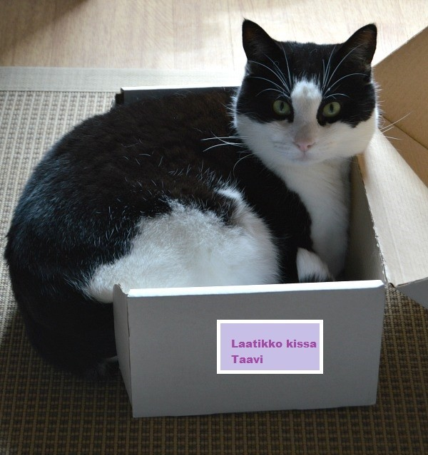 laatikko2.jpg