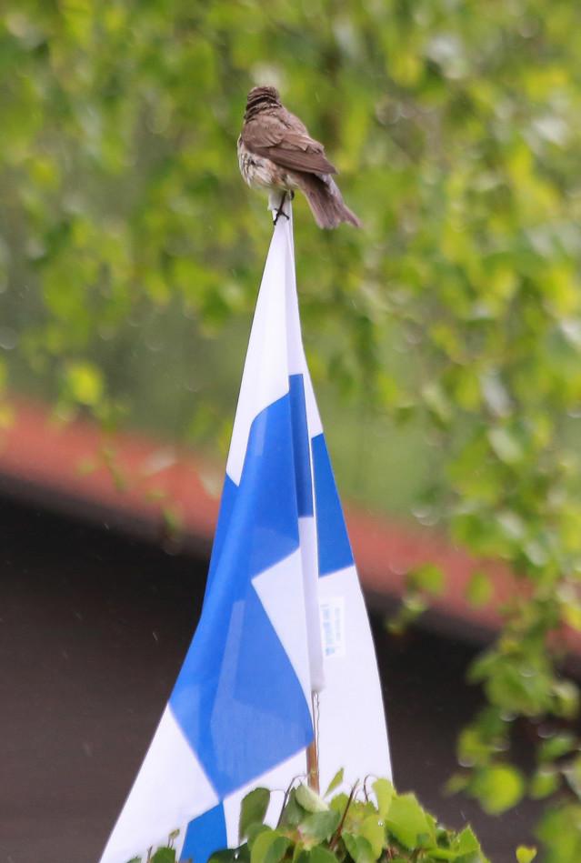 Suomen%20lipun%20p%C3%A4iv%C3%A4n%C3%A4.