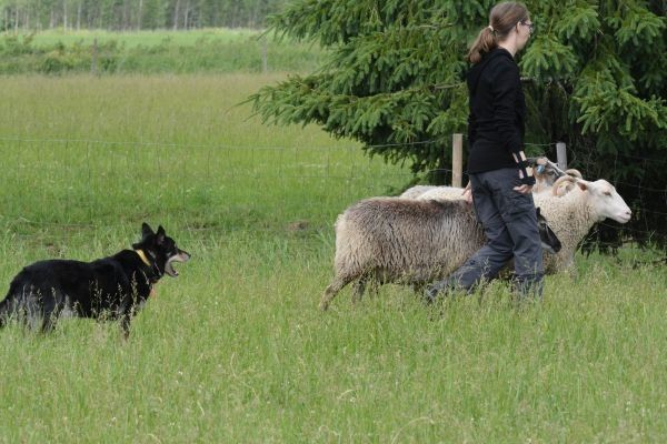katla-lammas.jpg