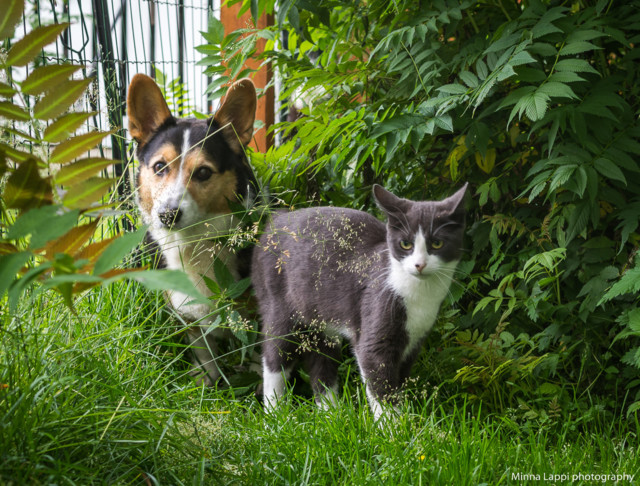 Kissa%20vastassa-2.jpg