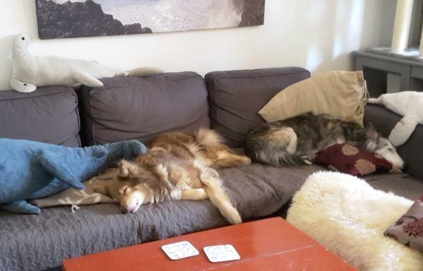 salka-fauna-sohvalla.jpg
