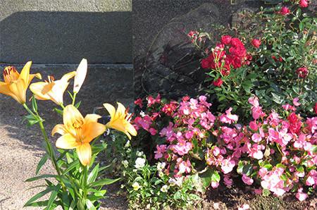 kukka%203.jpg
