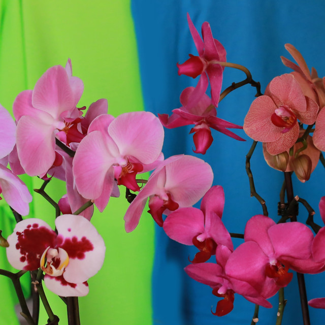 Orkidea%205.jpg