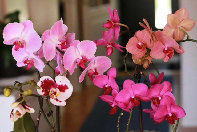 Orkidea%201.jpg