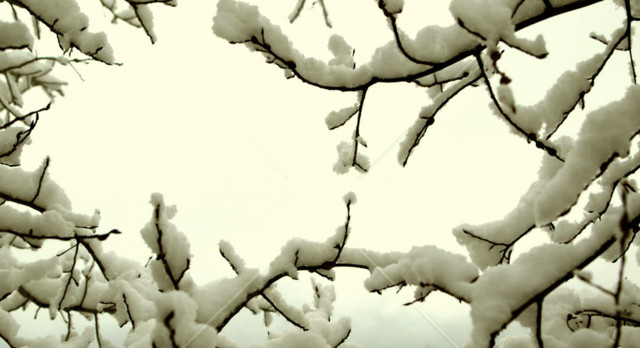 snow-on-Aspen-Tree-branches--X2.jpg?1572
