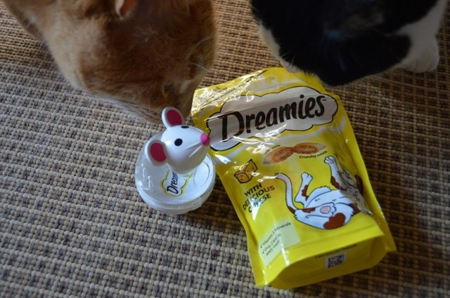 dreamies1.jpg