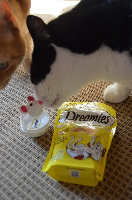 dreamies3.jpg
