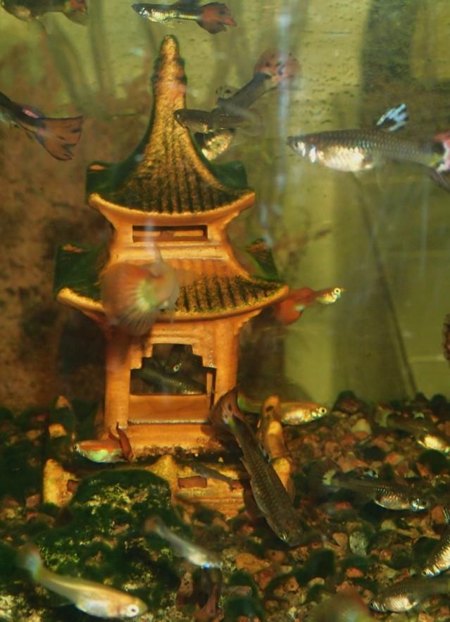 Akvaario%207.8.-16%20010.jpg