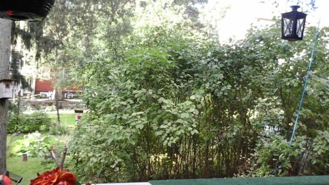 puud8.jpg