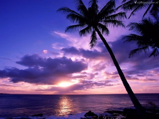 Palmu.jpg