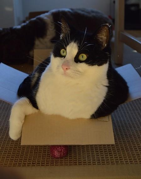 laatikko.jpg