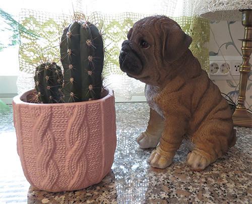 kaktuskoira.jpg