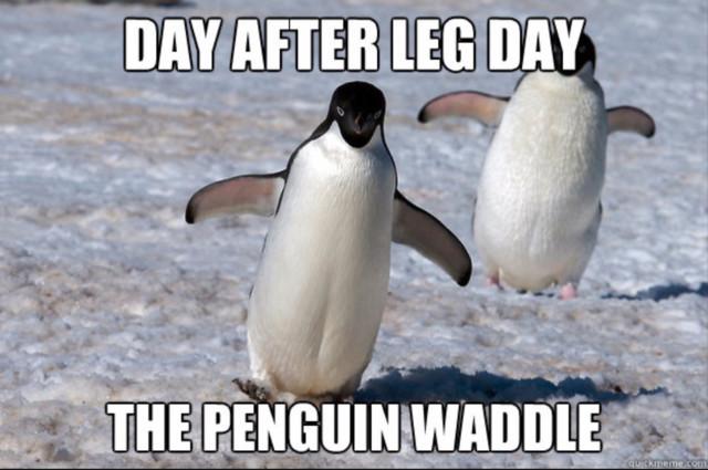 penguin_meme.jpg