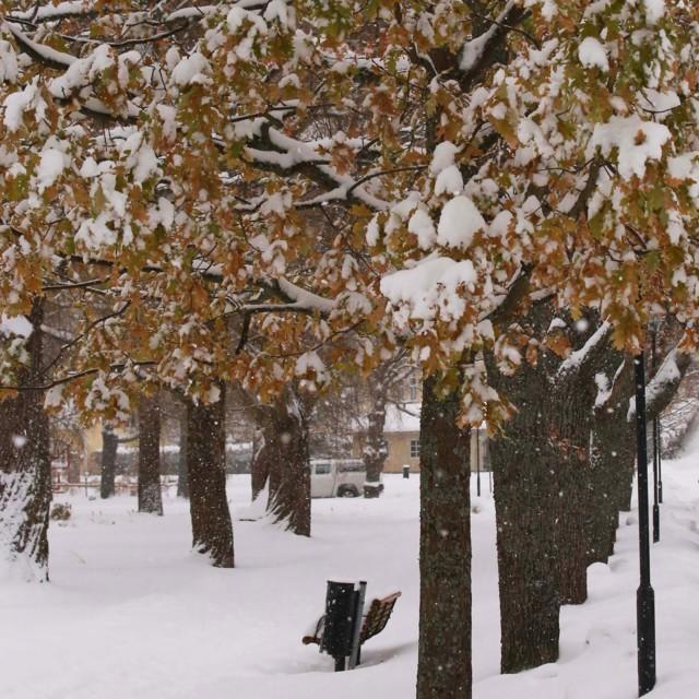 Lunta%20puussa.jpg