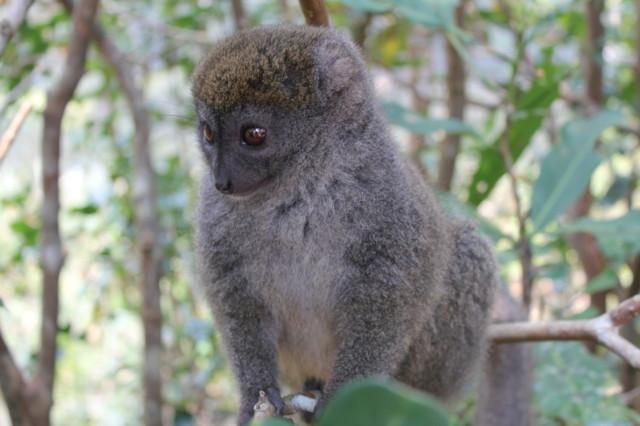 Madagaskar%20360.jpg