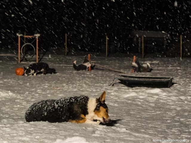 Lumisadetta-8.jpg