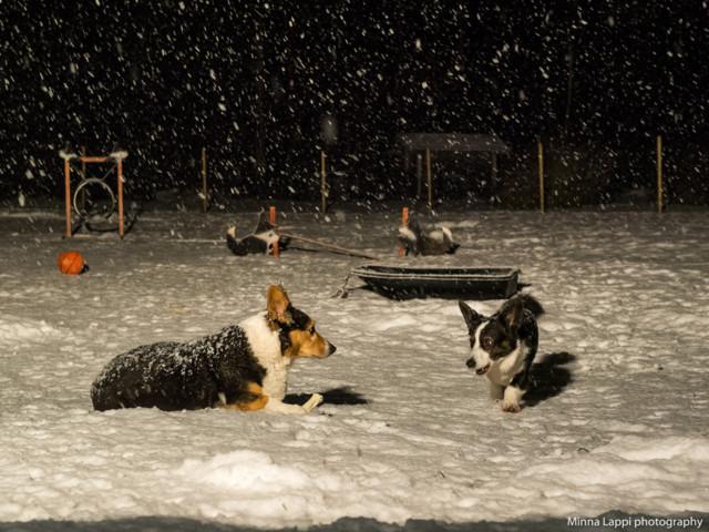 Lumisadetta-9.jpg