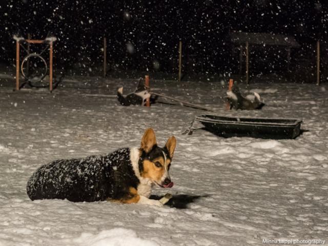 Lumisadetta-10.jpg