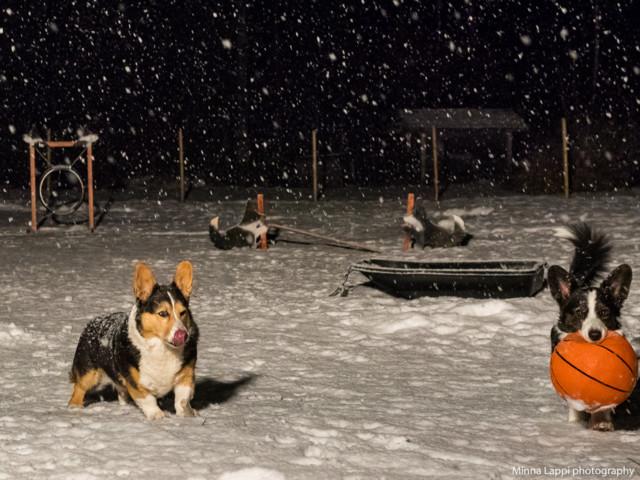 Lumisadetta-11.jpg