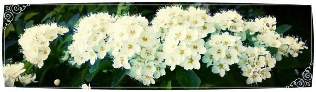kukkaloistoa-1024x301.jpg