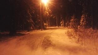 lumipuu.jpg