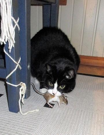 hiiri.jpg
