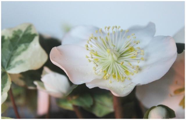 kukka-a.jpg