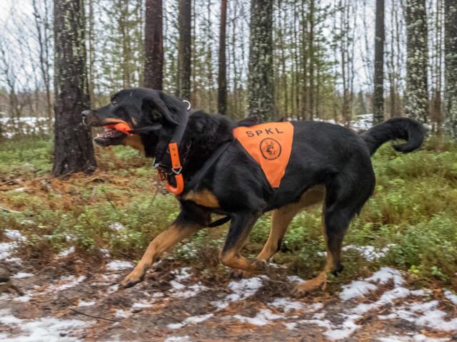 Rottweiler-6.jpg