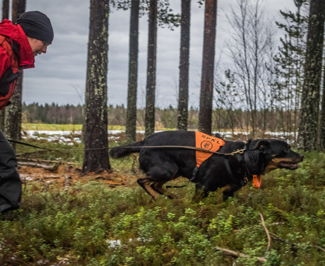 Rottweiler-8.jpg