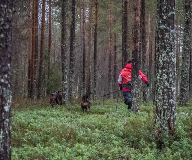 Rottweiler-8a.jpg