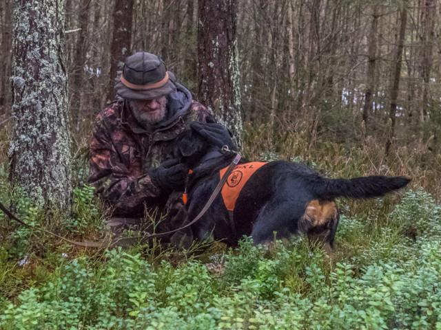 Rottweiler-10.jpg