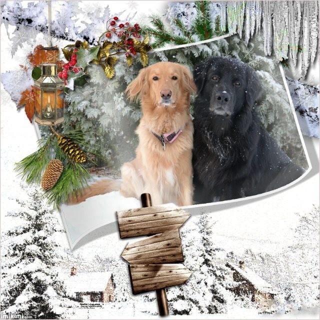 whitechristmas16.jpg