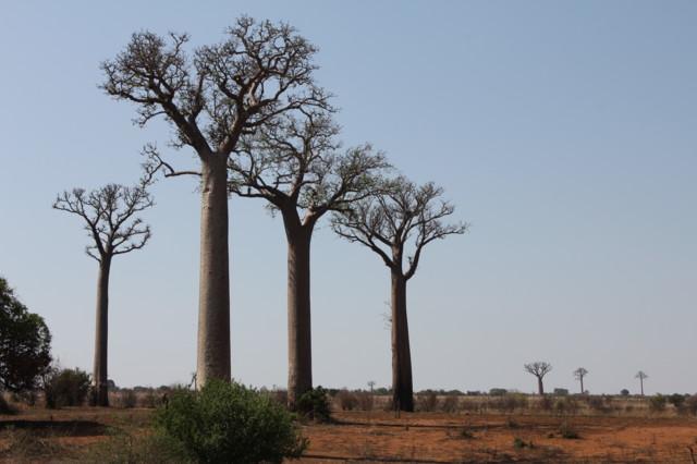 Madagaskar%201296.jpg