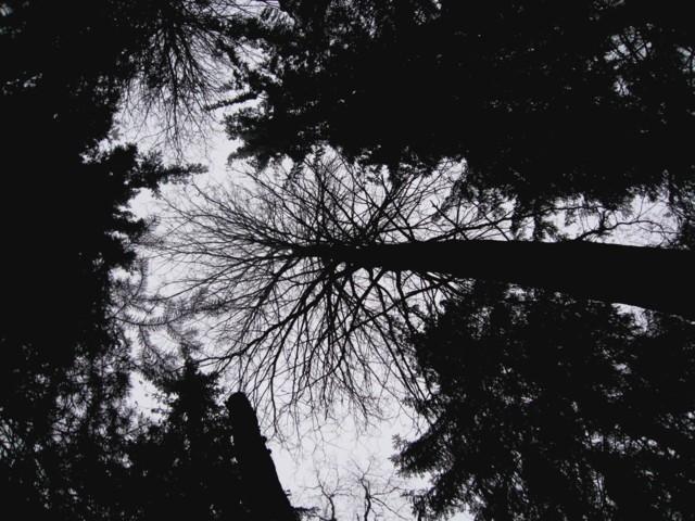 liitopuu.jpg