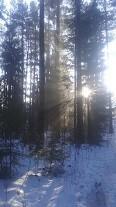 auringons%C3%A4de.jpg