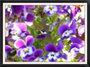 kukka2.jpg?1492346108