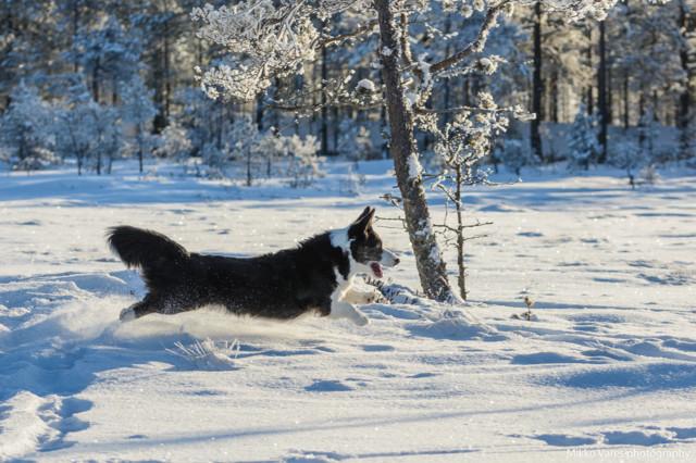 Neva-14.jpg