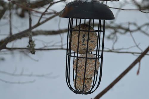 linnut2.jpg