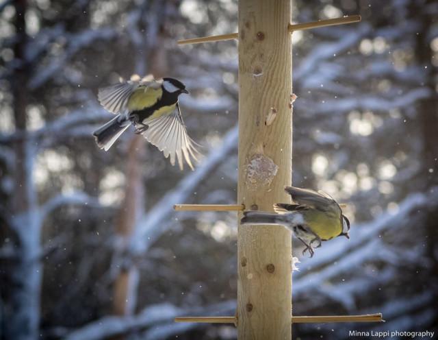 Lintujen%20ruokapuu-11.jpg