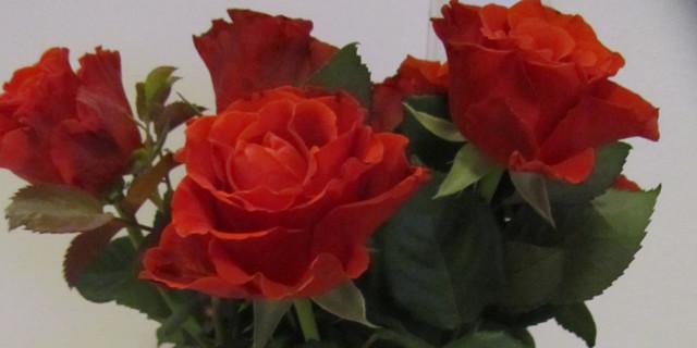 ruusuja.jpg