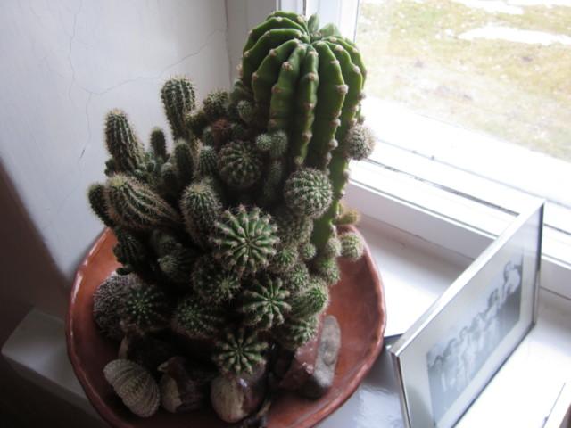 Kaktus%20019.jpg