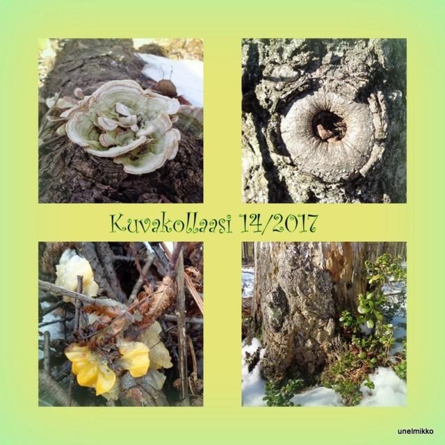 1-2017-03-11.jpg